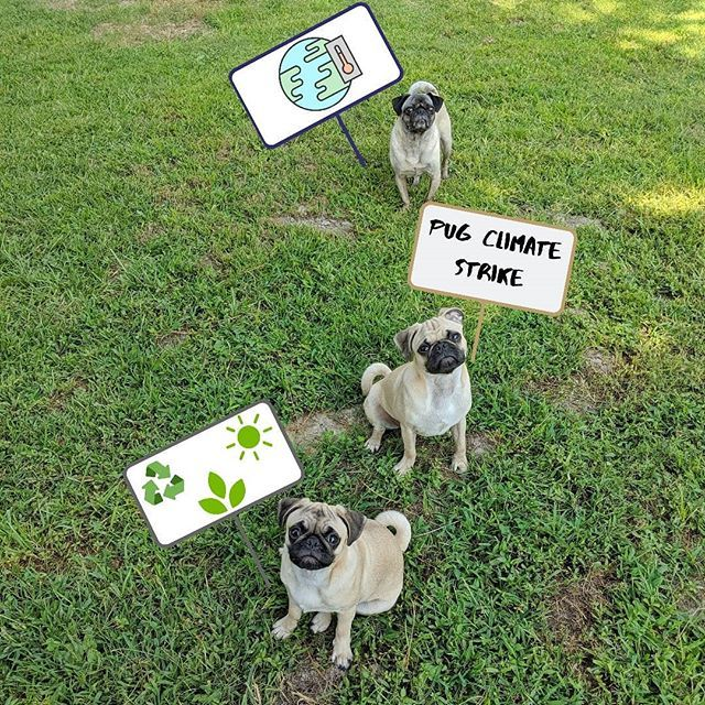 We Want A Habitable Planet For Future Pug And People Generations