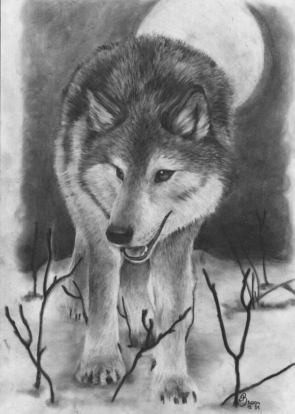 165 best wolf drawings images on pinterest wolf drawings 10 cool wolf drawings for inspiration ccuart Images