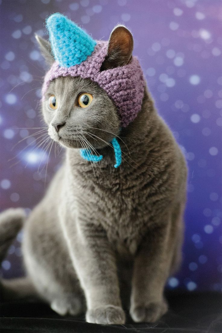 """Cats In Hats"" » Design You Trust. Design, Culture & Society."