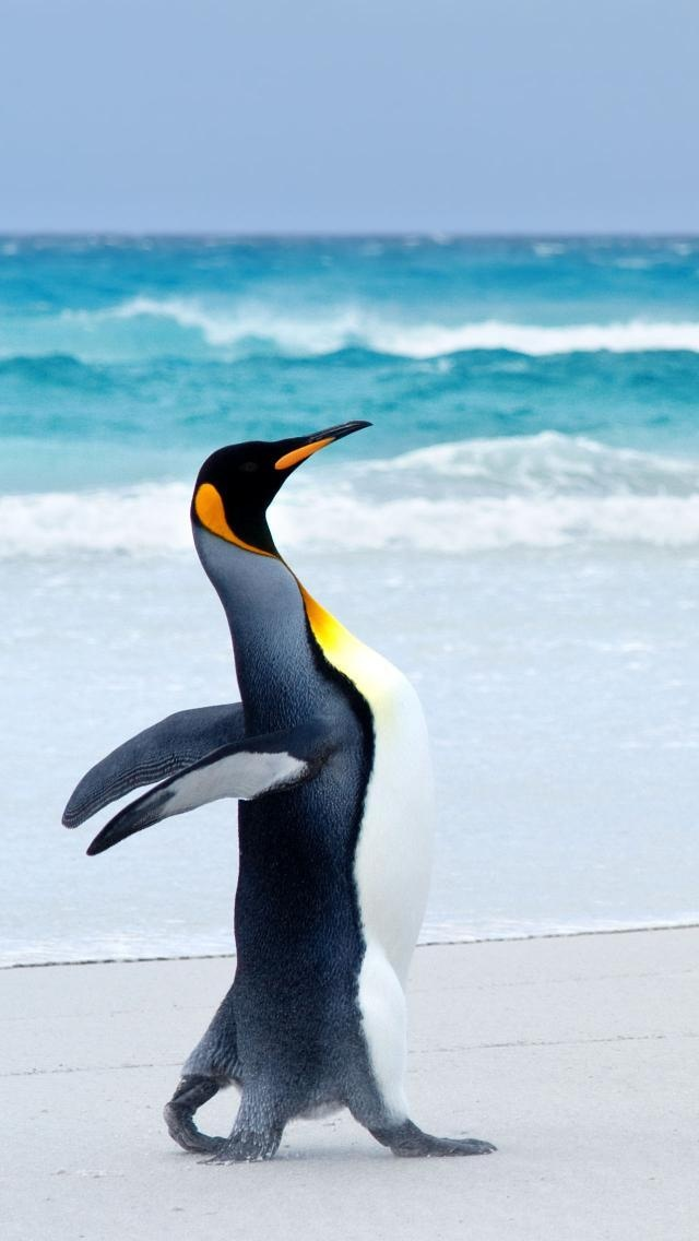King Penguin ✏✏✏✏✏✏✏✏✏✏✏✏✏✏✏✏ AUTRES MINERAUX - OTHER MINERALES ☞ https://fr.pinterest.com/JeanfbJf/pin-min%C3%A9raux-minerals-index/  ══════════════════════  BIJOUX ☞ https://www.facebook.com/media/set/?set=a.1351591571533839&type=1&l=bb0129771f ✏✏✏✏✏✏✏✏✏✏✏✏✏✏✏✏