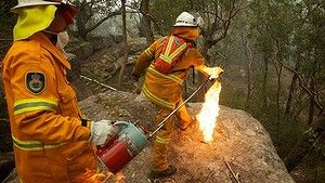 Banksia bombing ... NSW Rural Fire Service Crews  in property protection mode throw burning Banksia cones off an escarpment as they commence a back burn north of the Bells Line of Road between Berambing and Bilpin.