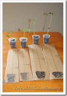 Plant Unit ideas, links, pictures, printables
