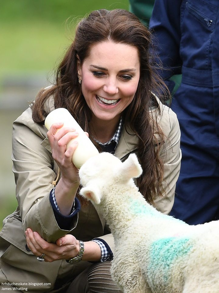 hrhduchesskate:  Farms for City Children, Gloucestershire, May 3, 2017-Duchess of Cambridge bottle feeds Stinky the lamb