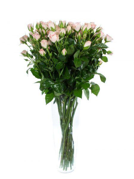 verzweigte rosen in der farbe rosa altrosa die sorte 39 lydia 39 jetzt entdecken auf. Black Bedroom Furniture Sets. Home Design Ideas