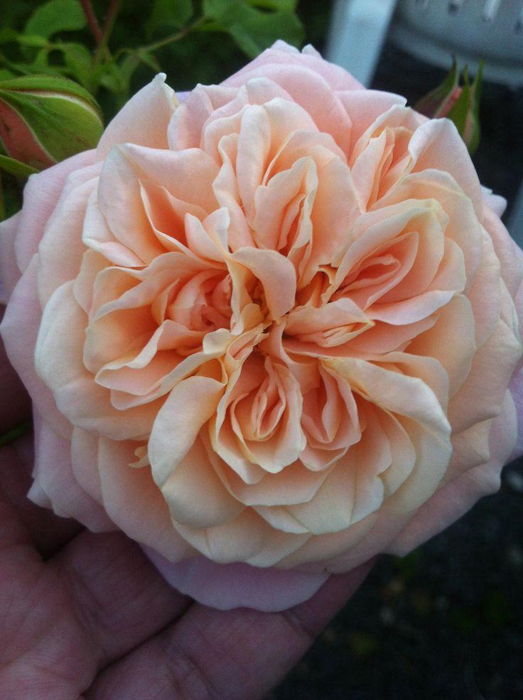 Perfume Garden Kalmar