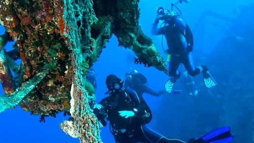 Divers taking pictures for reasearch - Marine biology, any divers dream study! #education #study #kilroy
