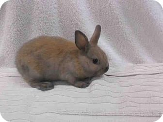 Van Nuys, CA - Other/Unknown. Meet A1579375, a pet for adoption. http://www.adoptapet.com/pet/14507845-van-nuys-california-rabbit WHO SAYS BUNNIES AREN'T GREAT PETS. THEY ARE BUT NOT FOR REALLY SMALL KIDS TOO FRAGILE.