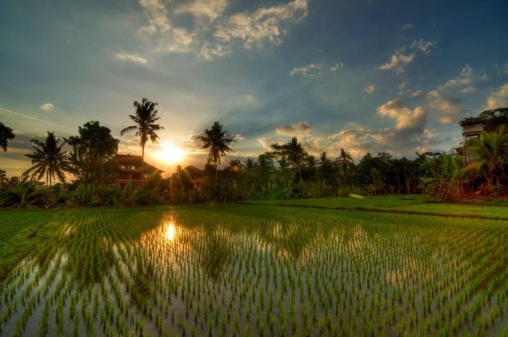Indonesia dikenal sebagai negara agraris karena sebagian besar penduduk Indonesia mempunyai pencaharian di bidang pertanian atau bercocok tanam.