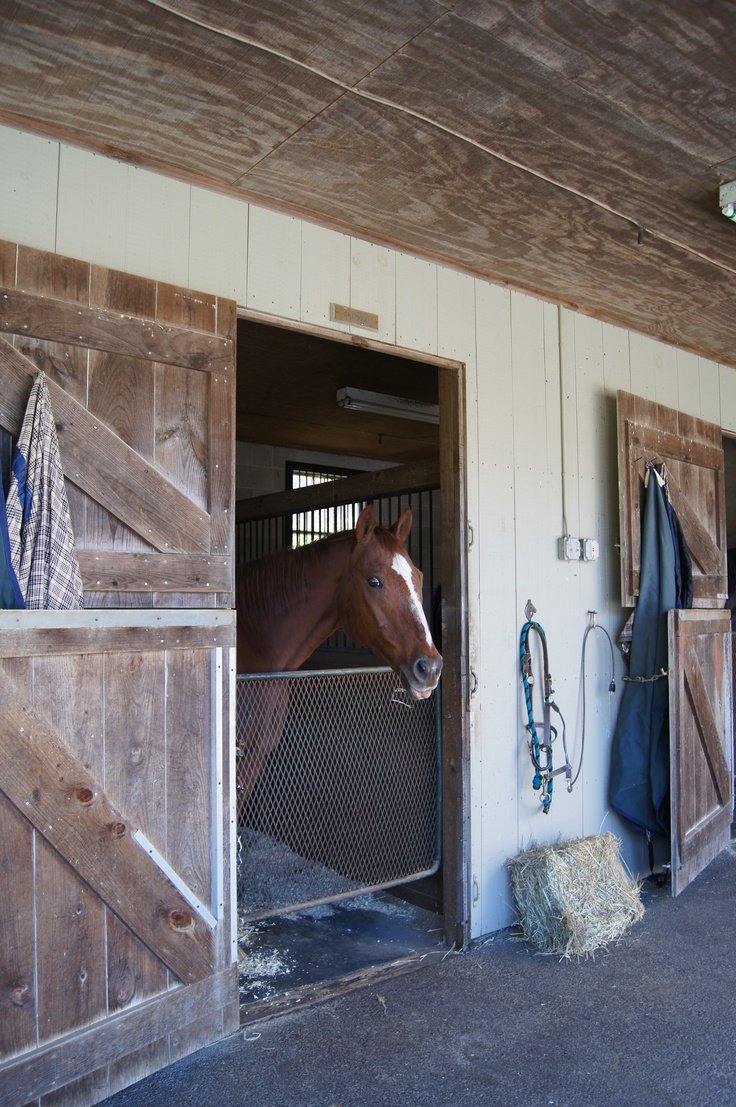 Horse Stalls I Love Stall Screens Probably Better Than