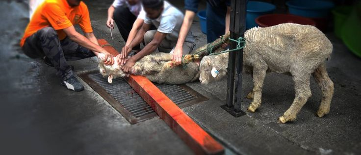 Sign the petition - Stop the illegal torture of exported animals.