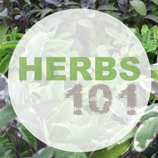 Herbs 101 : Tips on growing your own herb garden on Polka Dot Soup