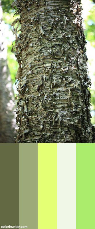 Japanese+White+Birch+/+Betula+Platyphylla+Var.+Japonica+/+白樺(シラカンバ)+Color+Scheme