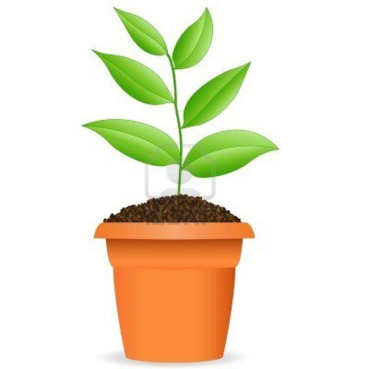 http://us.123rf.com/400wm/400/400/djdarkflower/djdarkflower1101/djdarkflower110100039/8678934-green-plant-in-a-flower-pot.jpg