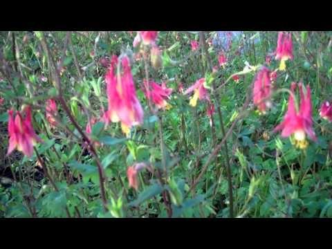 Nursery-Native Wildflower Tour- You Tube