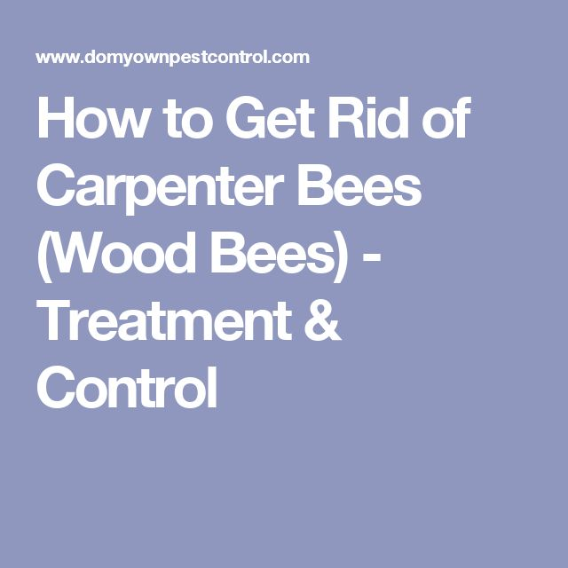 How to Get Rid of Carpenter Bees (Wood Bees) - Treatment & Control