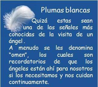 #UniversoDeAngeles Plumas blancas.