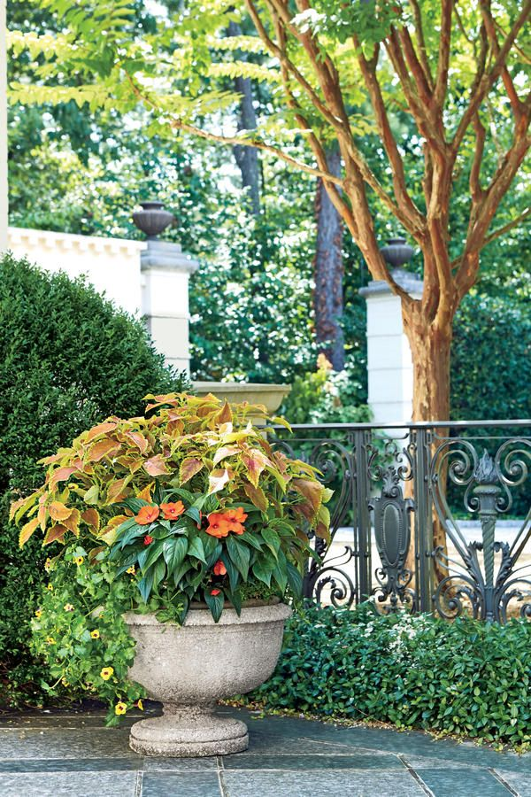 """Orange Crush - 122 Container Gardening Ideas - Southernliving. For a late-summer container that steals the show, make bold foliage the focal point. This easy-care, end-of-season planter uses vibrant """"Rustic Orange"""" coleus (Solenostemon scutellarioides), identified by its rusty-hued leaves that will last until the first frost. The filler in this space-saving pot is """"Compact Hot Coral"""" SunPatiens (Impatiens sp.), which has tiny tangerine blooms and dark, shiny leaves that contrast nicely with…"""