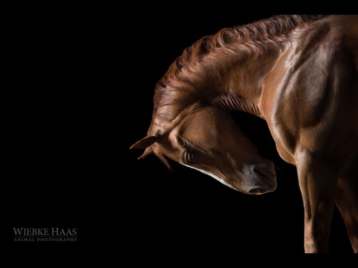 http://brightside.me/wonder-animals/16-photographs-showing-the-beauty-of-horses-115155/
