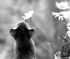 'Ah oui, mon cherie, I picked this flowur forru you!'