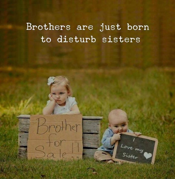 Brothers Are Just Born To Disturb Sisters Siblings Funny Quotes Sister Quotes Funny Best Brother Quotes