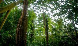 The Bloedel Conservatory is an indoor tropical garden in Vancouver's Queen Elizabeth Park.