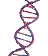 A new gene that appears to cause early-onset Alzheimer's disease has been discovered by the research team of Dominique Campion at Inserm in Rouen, France.: Early Onset Alzheimers, Alzheimer S Disease, Brain Activities, Disea Medical, Alzheimers Disea, Brain Image, Disea Patient, Alzheimers S But, Normal Brain