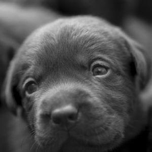 puppys_01