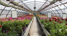 Nuova offerta: Vendita al dettaglio di fiori e di piante - Vicenza, Altavilla Vicentina, Creazzo - Green Park