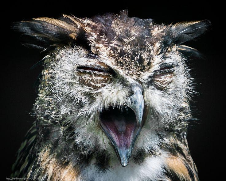 Owl https://flic.kr/p/yXQADo