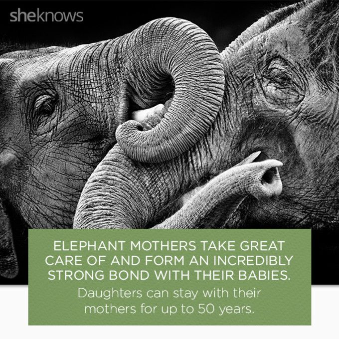 22 Elephant facts that prove they deserve better: Happy elephants