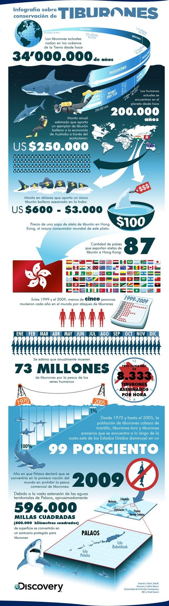 medio ambiente destacados  Protejamos a los tiburones #Infografía