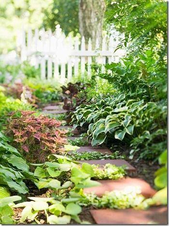 右中頃はオオバギボウシ(別名:ホスタ)。土をきれいにカバーしてくれ、夏には背の高い白い花が咲きます。