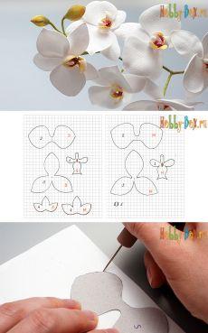 Мастер-класс «Белая орхидея Фаленопсис из фоамирана» - Hobby-Box.ru