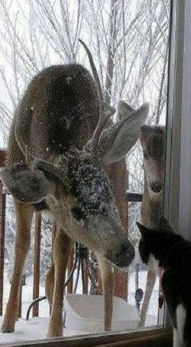 """Hello you small cat, can I come into the warm house? Please ... ask your humans! Yes?"""