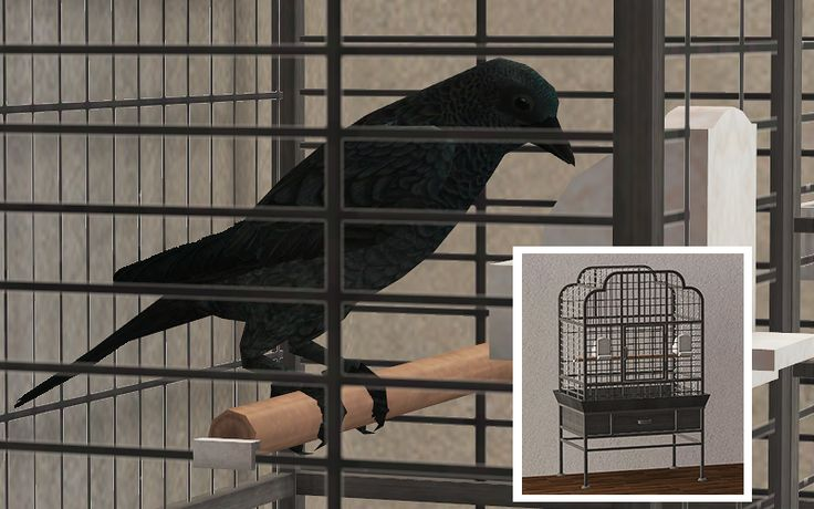 Have a pet crow in a dingy cage. Made purely out of a need to busy myself somewhat productively. Converted from Sims 3, cage is a simple clone of the Sims 2 one. Requires Pets, of course. Please put...