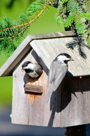 Nesting birds are rewarding to watch. Get five key tips for attracting birds to nest in your garden.