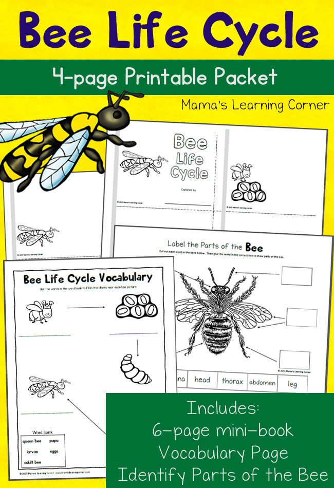 Bee Life Cycle Worksheets - includes a mini-book, label the parts of the bee, and vocabulary work