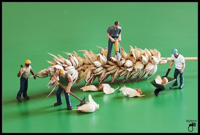 The Harvest by ► Hammer Head ◄, via Flickr
