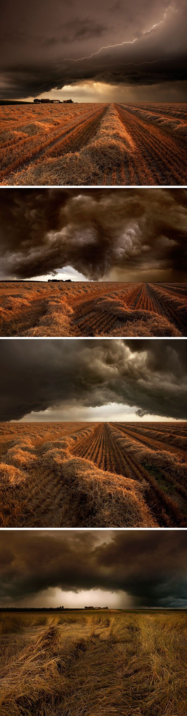 58 best TUMBLEWEED AMAZING VIREVOLETANT images on Pinterest