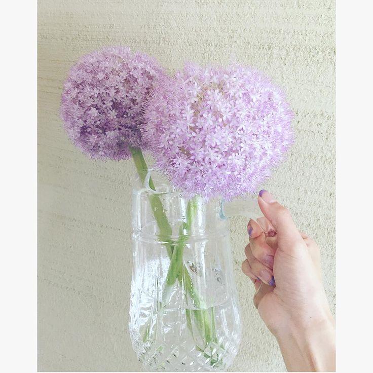 . そして 我が家の満開ボンボン�� まだ健在^ ^ 花粉をポロポロ落としながらも 爽やかにボンボン 綺麗な薄紫色を保ってます^ ^ 茎を洗ってお水を替えて… まだまだ元気です�� . #flowerstagram#flowerpot#flowerslovers#floweroftheday#freshflowers#flowermagic#flowerlove#bonbon#lovethiscolor#アリウムギガンチューム#アリウムギガンチウム#ギガンチウム#ギガンチューム#満開ボンボン#薄紫色#薄紫色の花#今日のお花#花のある暮らし#切花#水差し#満開#可愛い花#シンプルライフ http://gelinshop.com/ipost/1522865936356227690/?code=BUiToApDjpq