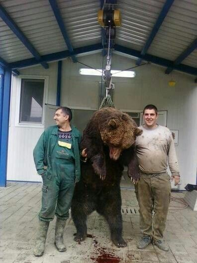 WHAT IN THE FREAKING HELL ARE THEY DOING!!!!!!!!!! Would those guys ever do that to their own children, I'm just asking cause I don't think so. So why would they do that too a innocent bear??!!!