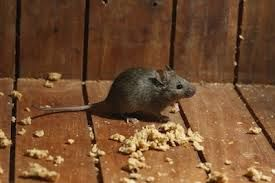http://www.pestsolutions.co.uk/ Get pest solution by expert professionals. Reclaim your house from pests. #PestSolutions