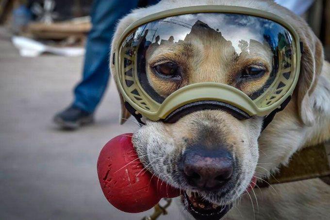 ¡Woao! Proponen a perrita rescatista de México como imagen de billete (+foto)