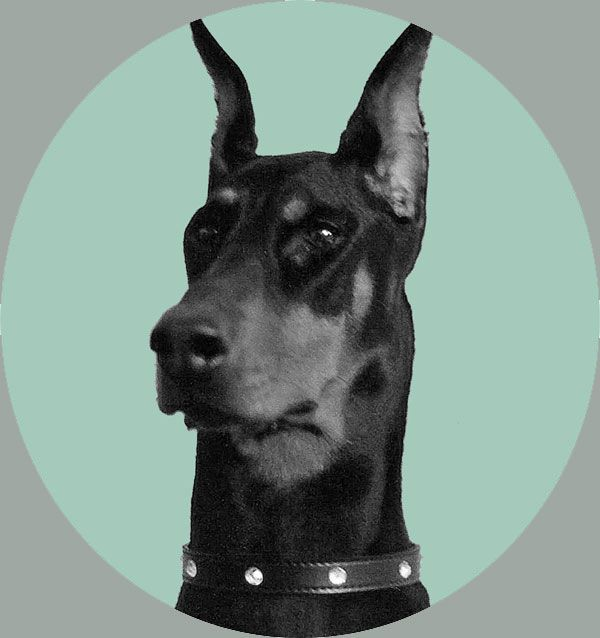 The pros and cons of doberman ear cropping.