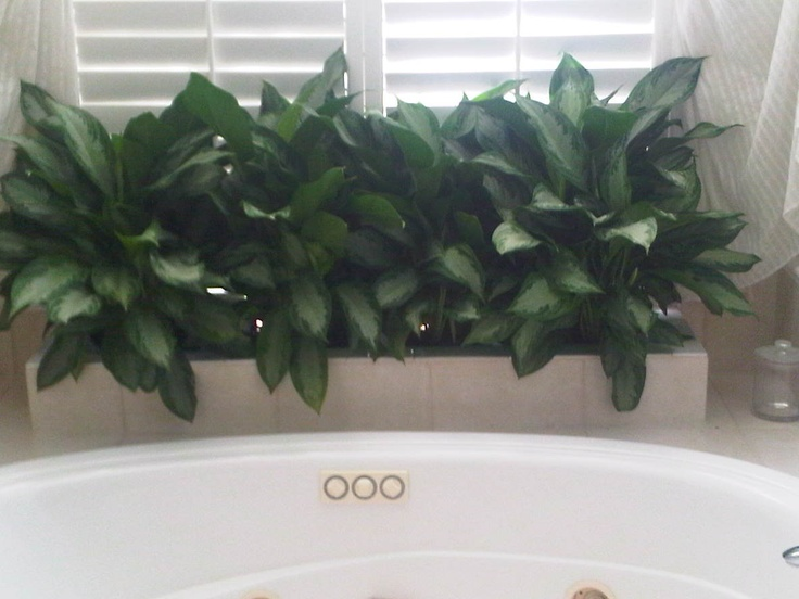 low light bathroom plants 17 best images about low light plants on snake 19318