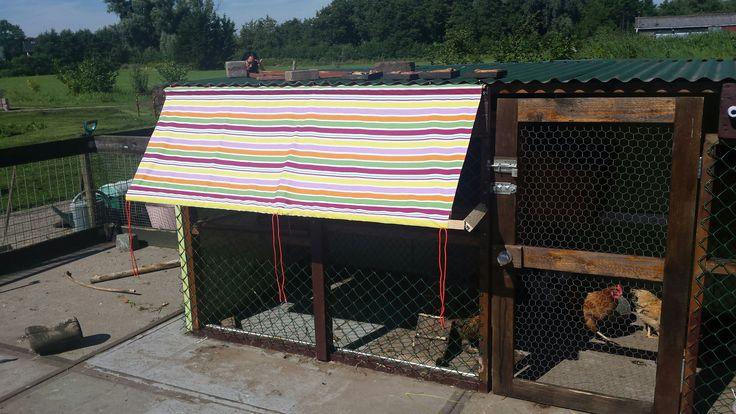 Voor de kippen ook een zonnescherm