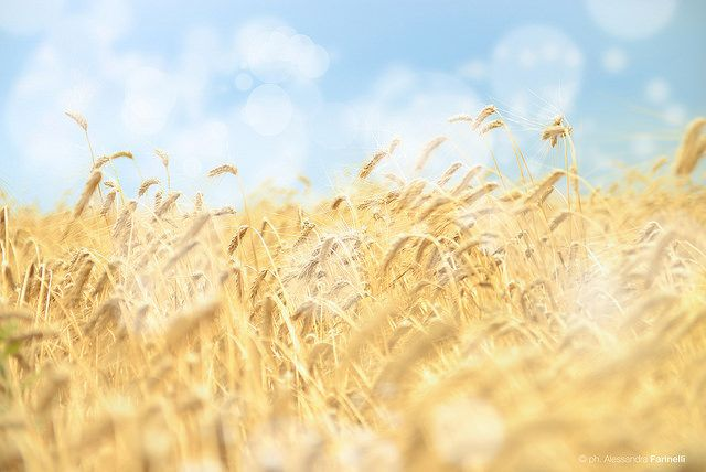 Festa del raccolto #Puglia 2014
