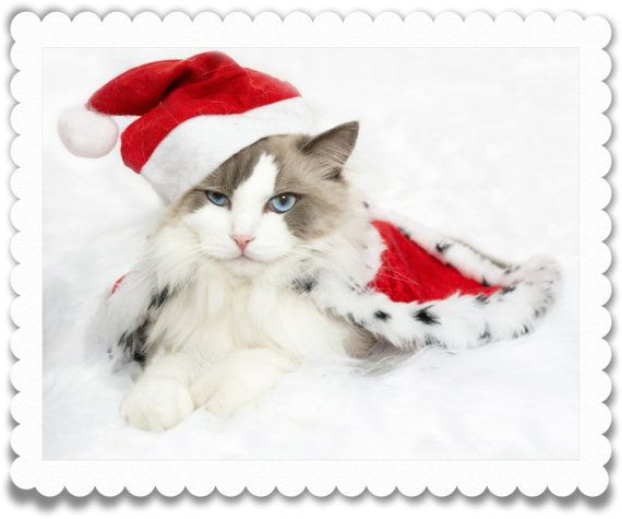 An electronic Christmas card featuring my Ragdoll cat dressed in Christmas outfit. The photo was taken by me using DSLR camera, various cards options were designed and created by me as well.  Cards that you will be able to download during the purchase:  Christmas card, WITHOUT text in a white frame Christmas card, WITHOUT text or frame  USES:  Commercial use e.g. printing cards etc. *** NOT for resale in digital form. ***  OTHER DETAILS:  Dimensions: 2700 x 2160 Resolution: 300 dpi Bit…