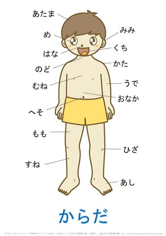 言葉の絵カード「体(1)」