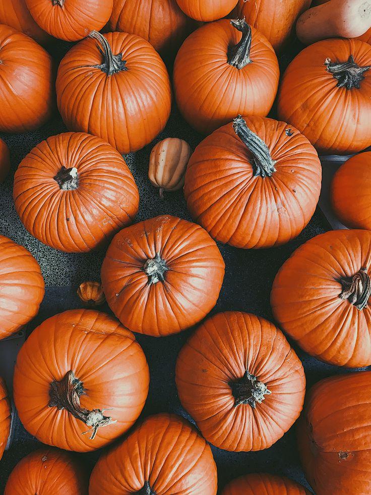 pumpkins fall Halloween wallpaper background iPhone